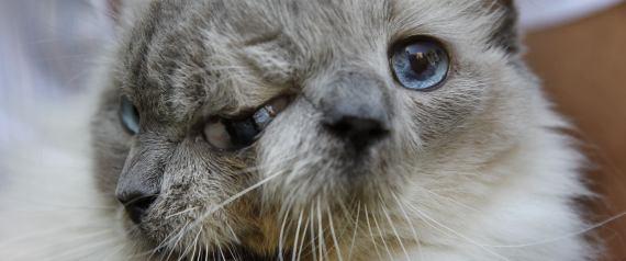 APTOPIX Two Faced Cat